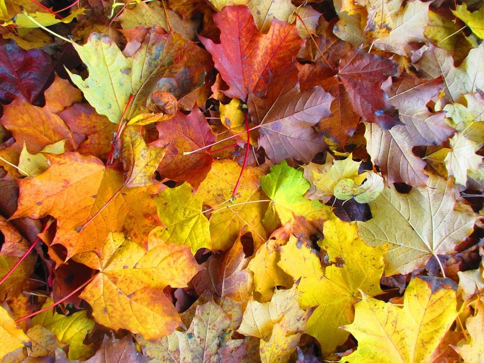 leaves-996525_960_720